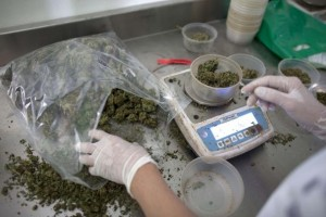 Guarda la versione ingrandita di Cannabis legale, ddl alla Camera il 25 luglio. Ma Ap dice no