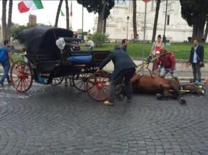 """Roma """"botticelle"""", cavallo stramazza al suolo a Piazza Venezia FOTO"""