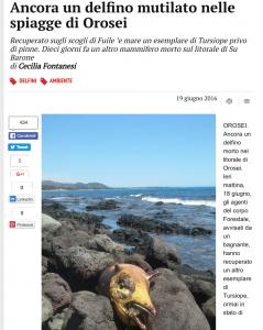 Delfino morto e mutilato sulle spiagge di Orosei: il 2° in 10 giorni
