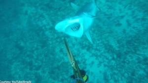 VIDEO YOUTUBE Sub lo provoca, squalo lo azzanna