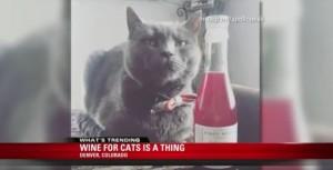 YOUTUBE Vino per gatti: MosCATo o Pinot Meow?