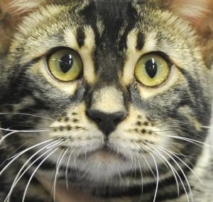 YOUTUBE Gatto vivo e morto in 2 scatole: il paradosso