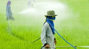 Glifosato: agricoltori Ue, dare autorizzazione per 15 anni