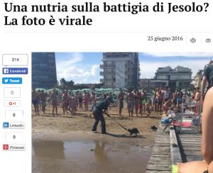Jesolo, nutria in spiaggia tra i bagnanti