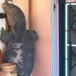 VIDEO Lucertola gigante davanti alla porta di casa 2