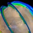 Marte, tempesta di sabbia spettacolare: può durare mesi FOTO