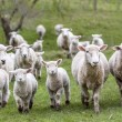 Berlusconi contro i pastori sardi. Il giudice dà ragione a loro