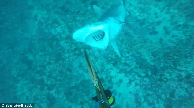 YOUTUBE Pescatore attaccato alle gambe da squalo