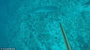 YOUTUBE Pescatore attaccato alle gambe da squalo9