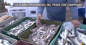 Pesce, la dubbia provenienza di quello che compriamo VIDEO