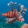 Mare, attenti ai pesci leone: belli e letali, invadono il Mediterraneo