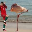 Cristiano Ronaldo con calze e spaventato. Zimbello del web FOTO 5