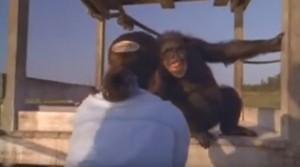 Dagli scimpanzé 25 anni dopo, accolta con sorrisi e abbracci