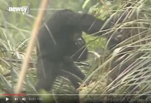 """Scimmie ubriache fanno festa col """"vino di palma"""" VIDEO"""
