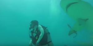 VIDEO YOUTUBE Squali, come si sopravvive ad un attacco