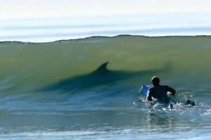 Australia, squalo bianco attacca. Surfista perde la gamba