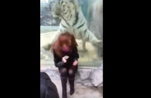 YOUTUBE Tigre salta contro turista allo zoo ma...