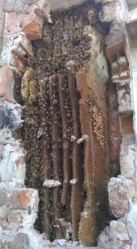 Sardegna, buco nel muro: dentro alveare gigante 03