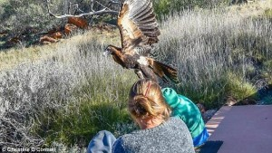 Aquila aggredisce con gli artigli bambino di 7 anni5