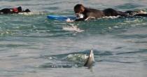 Australia, squalo a riva: surfisti escono di corsa FOTO