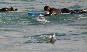 Guarda la versione ingrandita di Australia, squalo a riva: surfisti escono di corsa FOTO