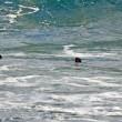 Australia, squalo a riva: surfisti escono di corsa dall'acqua FOTO4