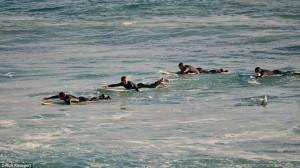 Australia, squalo a riva: surfisti escono di corsa dall'acqua FOTO5