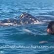YOUTUBE Megattera intrappolata nella rete da pesca chiede aiuto a canoisti 4