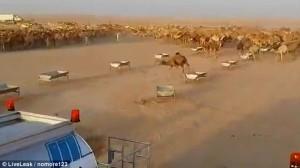 Guarda la versione ingrandita di YOUTUBE Cammelli nel deserto, autobotti per non farli morire di sete
