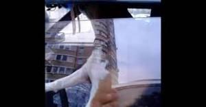 Cane in auto da solo, piange e si attacca al clacson4