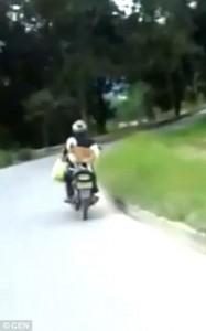 Guarda la versione ingrandita di YOUTUBE Cane in piedi su sedile scooter, il gatto invece viaggia così