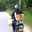 Cane in piedi su sedile scooter4