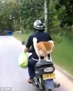 Cane in piedi su sedile scooter77