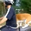 Cane in piedi su sedile scooter3
