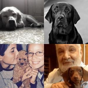 Lamento per la morte di un amato labrador. Cesare Lanza: i cani della mia vita