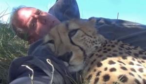 Guarda la versione ingrandita di YOUTUBE Cucciolo ghepardo incontra di nuovo il volontario: coccole e abbracci