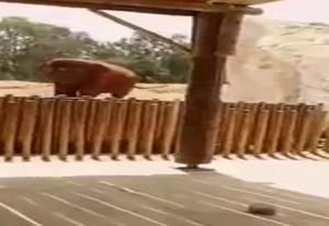 Elefante uccide accidentalmente bimba di 7 anni8