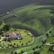 Florida, invasione di alghe verdi guacamol
