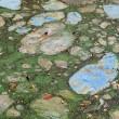 Florida, invasione di alghe verdi guacamole7