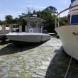 Florida, invasione di alghe verdi guacamole5