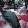 Isole Faroe, mare si tinge di rosso