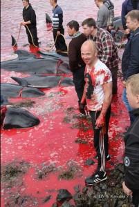 Come gli anni passati, anche quest'anno gli ambientalisti di Sea Shepherd hanno provato a fermare la mattanza e sono stati arrestati.55