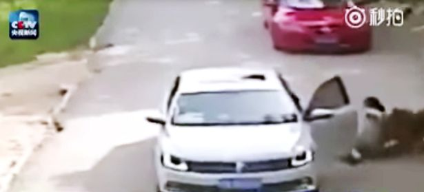 VIDEO YOUTUBE Donna uccisa da tigre in un parco naturale in Cina 07