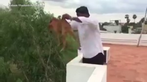 Lancia cane da terrazzo e mette video su Facebook444