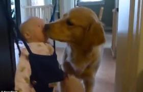 YOUTUBE Lecca viso a bimba, mamma prova ad allontanare cane ma..
