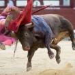 Madrid, torero incornato nella Plaza de Toros5