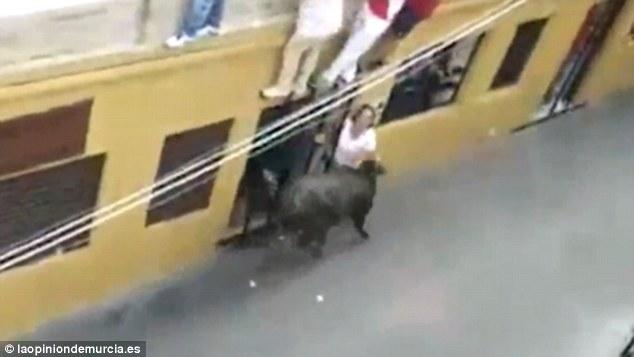Mamma incornata a morte da toro davanti a marito e figli4