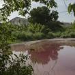 Messico, lago ricoperto di sangue infestato da 300 coccodrilli 4