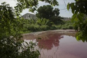 Guarda la versione ingrandita di Messico, lago ricoperto di sangue infestato da 300 coccodrilli FOTO