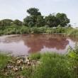 Messico, lago ricoperto di sangue infestato da 300 coccodrilli 3